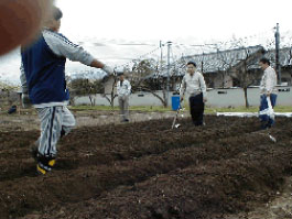 2003年4月に初めて栽培を始めた頃の様子。