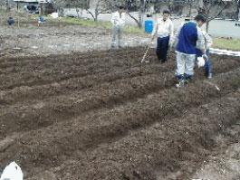 初めて土に親しむ社員が多かったので、ウネを作るのにも一苦労でした。